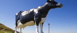 Cash cow of the Century