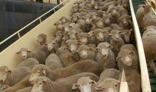 Indonesia move on live exports welcomed