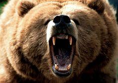 Bears' long-term gain
