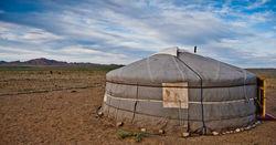 Mongolian bellwether