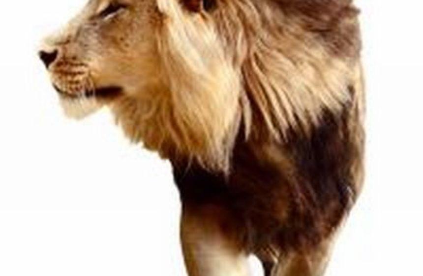 Lion's thorny problem
