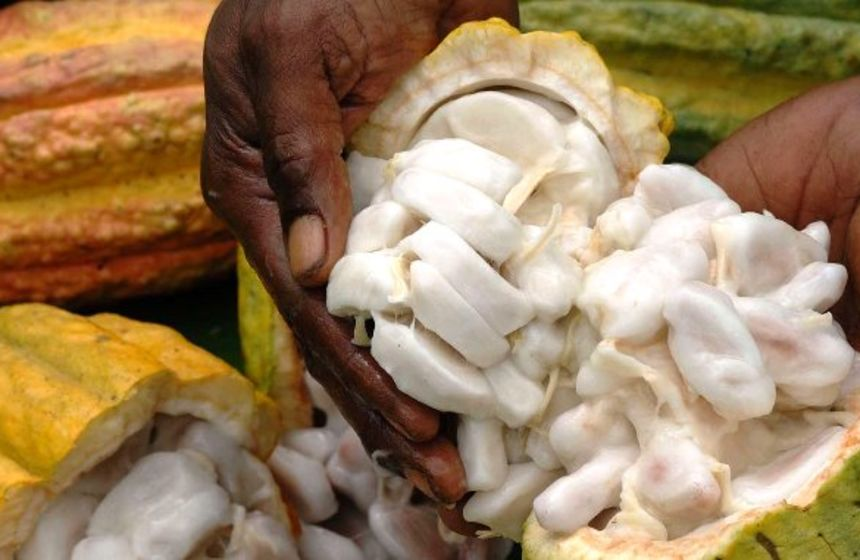 Remote freight subsidy for Northern Province cocoa farmers