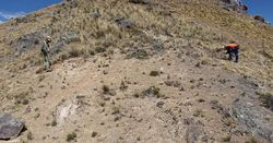 Inca magnifies zinc focus